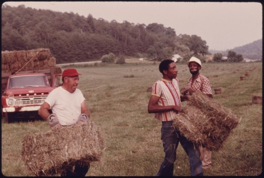 Workers on a farm in Georgia