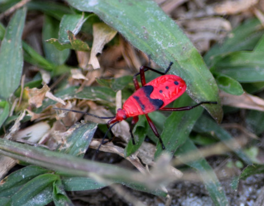A colorful insect at Hollong
