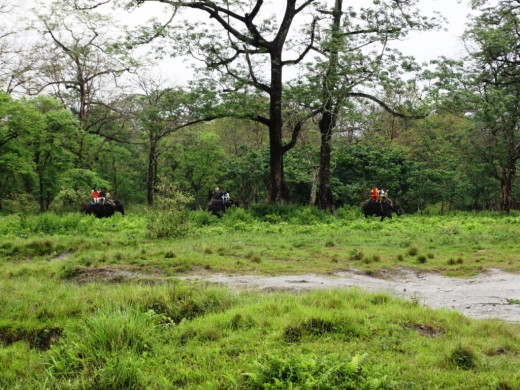 Elephant safari 1; Hollong