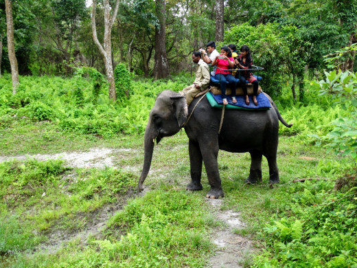 Elephant safari 4; Hollong