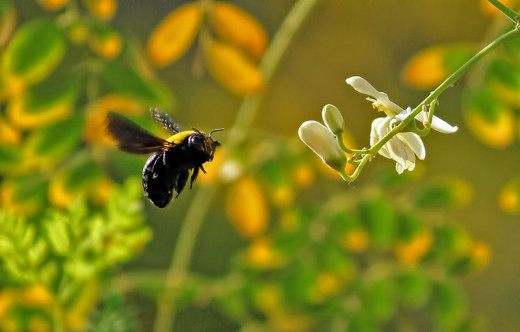 Have you tried natural remedies for getting rid of carpenter bees?