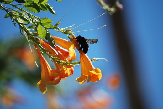 Getting Rid of Carpenter Bees: Prevention is Better than Cure