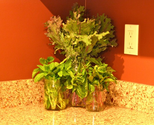 Cut kale, basil & mint in mason jars.