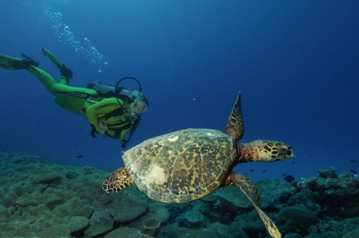 A diver observing a Turtle in the waters beneath Bangaram Island