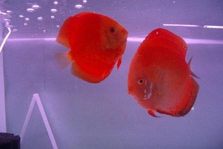 Tropical fish in Marine Aquarium, Kavaratti
