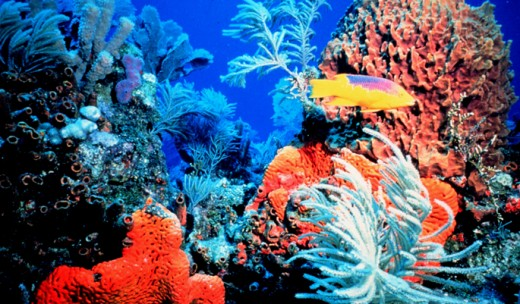Gorgeous coral reefs are present in Lakshadweep
