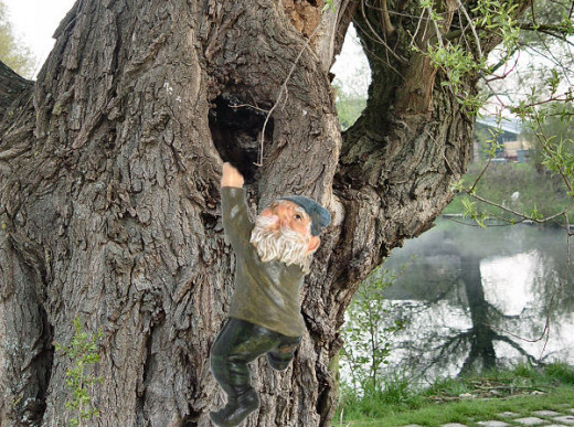 Little climbing gnome in a willow tree