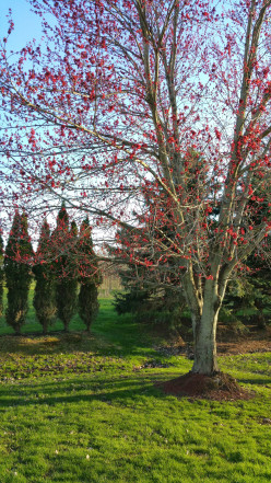 Stunning Landscaping, Choosing The Right Trees For Year Round Beauty