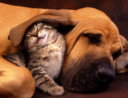 Cats and dogs can love one another if they start as pups or kittens