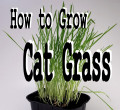 Easy Guide to Growing Cat Grass