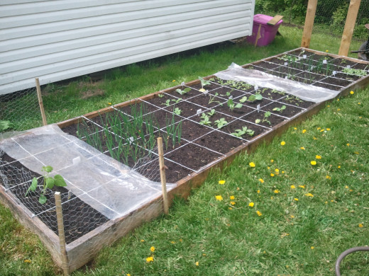 You can grow more efficiently by taking on a modular approach with square foot gardening