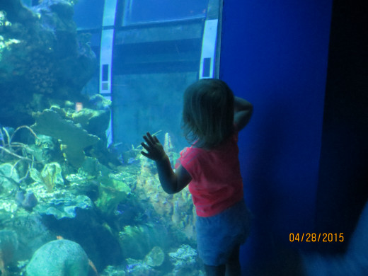 My granddaughter looking into the aquarium.