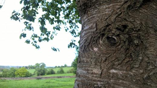 Tree 640