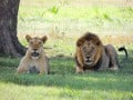 The Big Five Animals of Africa