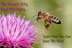 Honeybee Facts | Why Bees Are Dying and How to Save The Bees