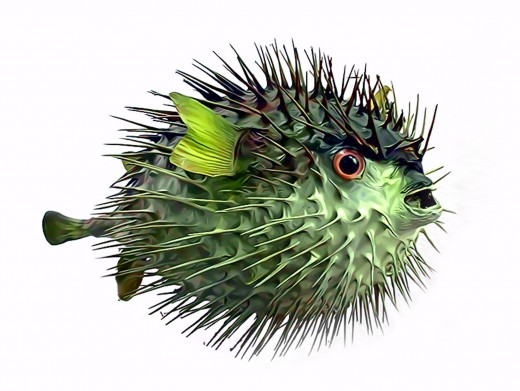 Puffer fish venom could eliminate the side effects from pain killers that cause uncomfortable nausea that is common during chemotherapy treatments.