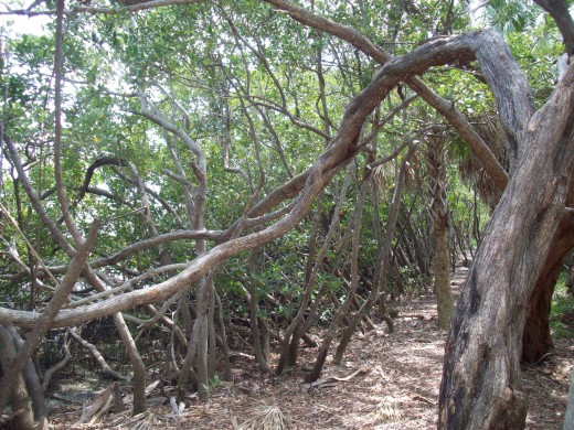 Something evil lurks in these trees along the coastline in Florida...