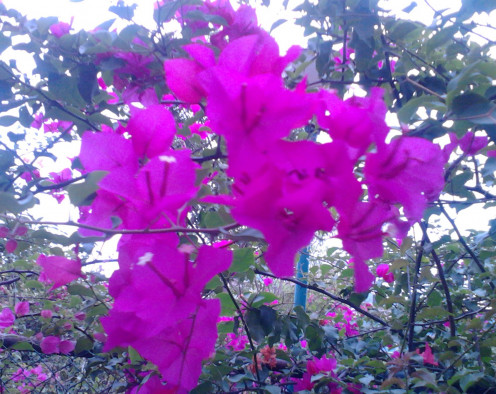 Thorny Plant