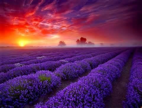 Celestial Meadow