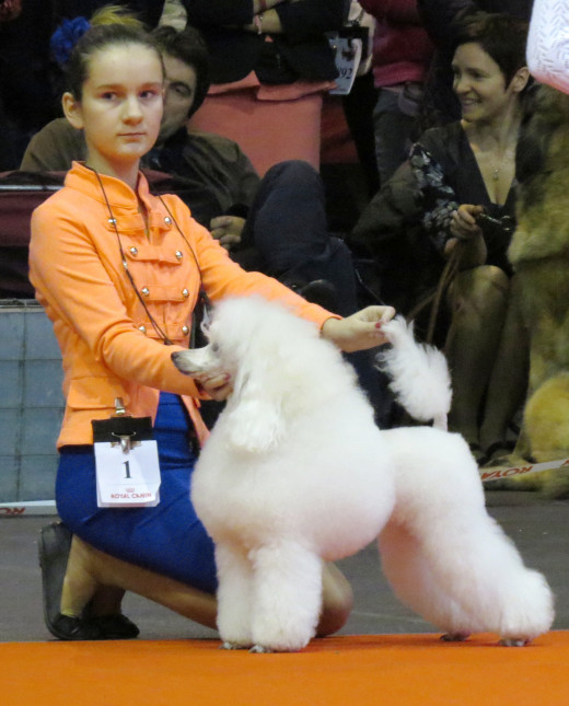 She had a Toy Poodle and normally entered it in dog shows. In 2013 it became a Baltic Winner.