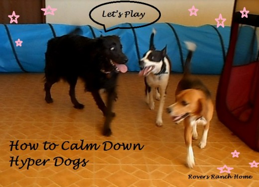 How to calm down hyper dogs, hyperactive dogs, training hyper dogs