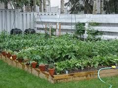 Garden coming soon!