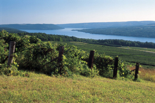 The Finger lakes are famous for the wineries that surround the beautiful bodies of water.