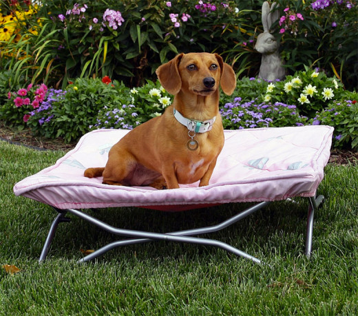 fold and go with your pet in style