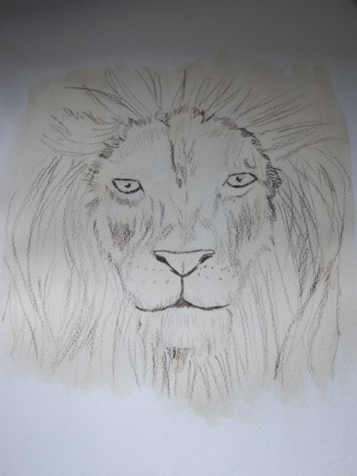 The lion with a light wash of the brewed coffee.