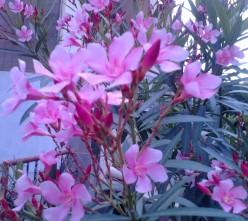 Enchanting Flowers