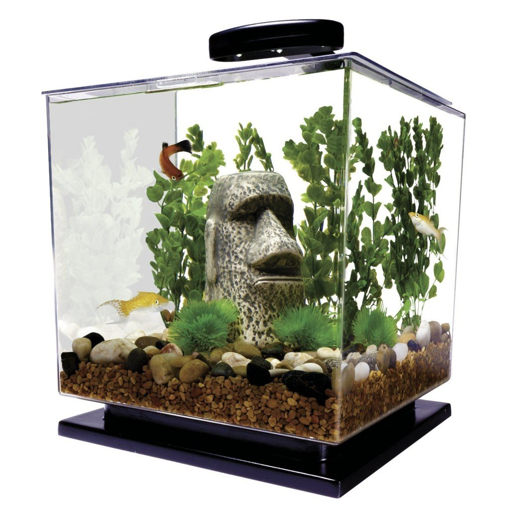 Aquarium fish 5 gallon tank - Betta Fish Tanks How To Choose The Best Aquarium For Your Betta Pethelpful