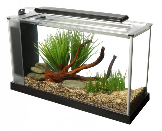The Fluval Spec 5: An aquarium kit is an easy way to get into the Betta keeping hobby.