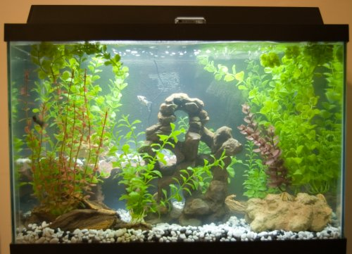 Title: Our New Fish Tank  Attribution License: http://creativecommons.org/licenses/by/2.5/ Photographer: dlkinney: everystockphoto.com
