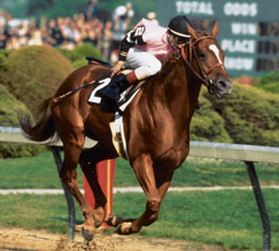 Affirmed, winner of the 1978 Triple Crown, and the last winner of the series.