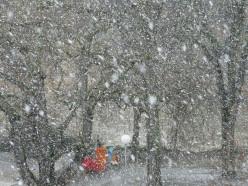 Snowfall Mystery