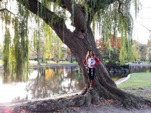 Weeping willow trees thrive in the cool wetlands of Boston Common.