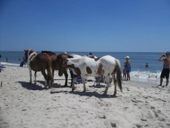 Reasons You Should Visit Assateague Island in Maryland