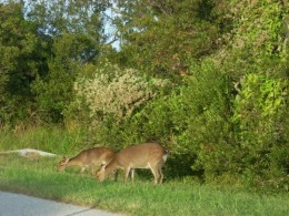 While driving around, you can see wildlife, like deer.