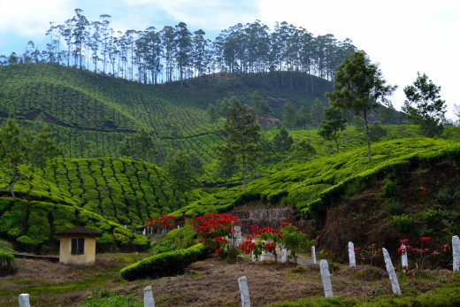 Scenic Beautiful View of Munnar By Ben3john [CC-BY-SA-3.0 (http://creativecommons.org/licenses/by/3.0/)], via Wikimedia Commons