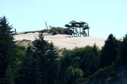 Dunes National Recreation Area, south of Portland on the pacific Coast.