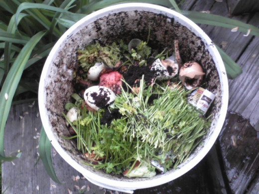 After a while, the compost seems normal and not gross. All the green stems are from parsley I used to make tabbouleh. Or tabouli. Spell it as you wish.