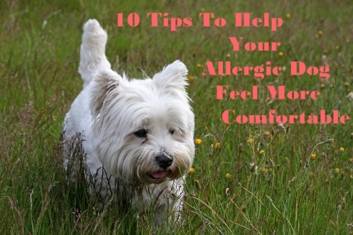 10 Effective Tips to Help Your Itching Dog Feel More Comfortable