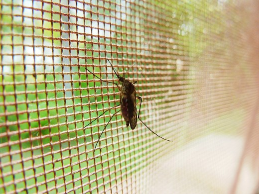 Can you keep mosquitoes away without fly screens or harsh chemicals? Yes!