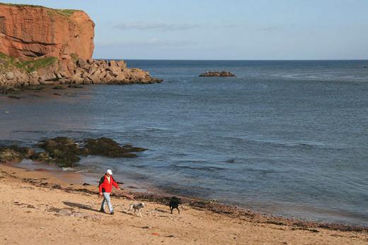 Walking a dog along a beach - Heaven on Earth