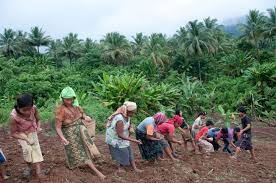 Women at planting time