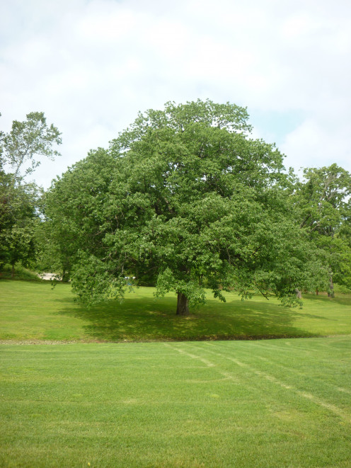 Oak Tree Springhouse Garden