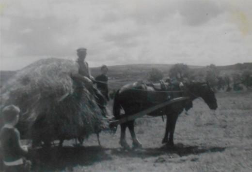 Bringing in the hay at Knocknagoshel, 1940s.