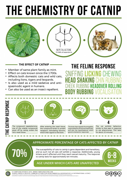 This infographic shows the chemistry behind catnip's hallucinogenic effect on cats.