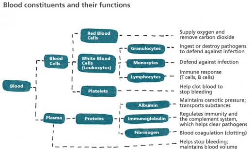 Blood Constituents & Their Functions