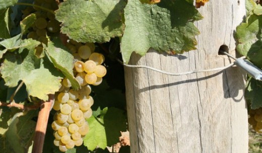 Ice Wines – Frozen Grapes Are Sweet! Pinot Noir, fickle but worth it…and in Idaho! Source: Official Documentary Website / Used with Permission